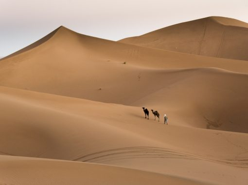 Sahara Villmarkstur – Lev som en nomade