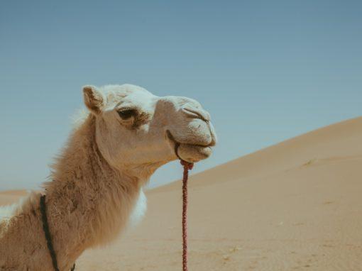 FROM OUARZAZATE: Day trip No. 3:  Draa Valley – Zagora – Tinfou Dunes