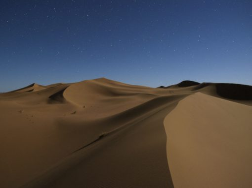 Sahara Wild Camps
